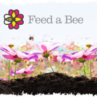 Free Seed Packet of Bee-Attracting Flowers: Freebie from FeedaBee.com