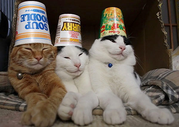 cats hats coupons