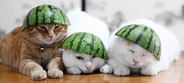 cats watermelon hats