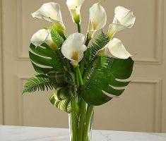 calla lilies send