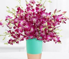 send orchids mothers day meaning