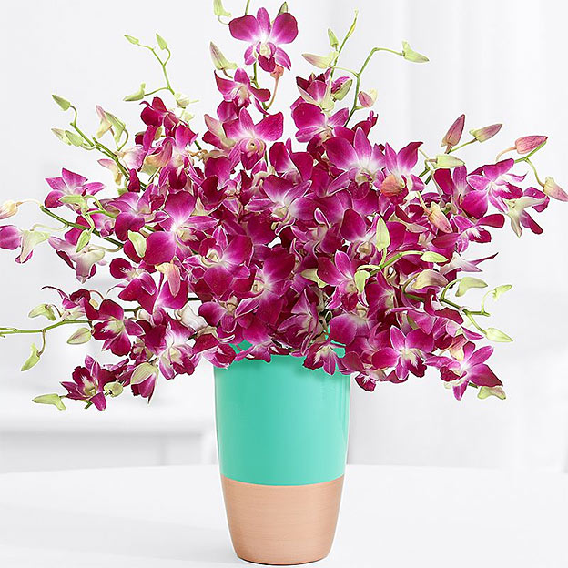 Send Orchids Mothers Day Freebie Spot