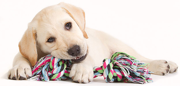 Cheap DIY Dog Toys Your Dog (And Wallet) Will Love
